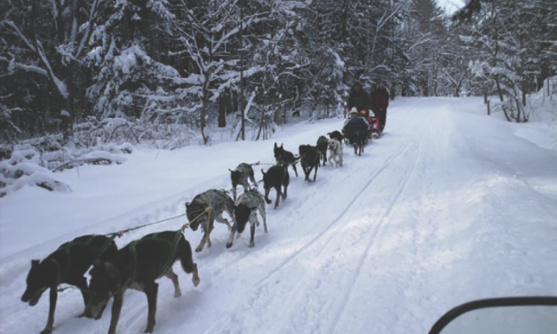 Dog sled rides to be offered