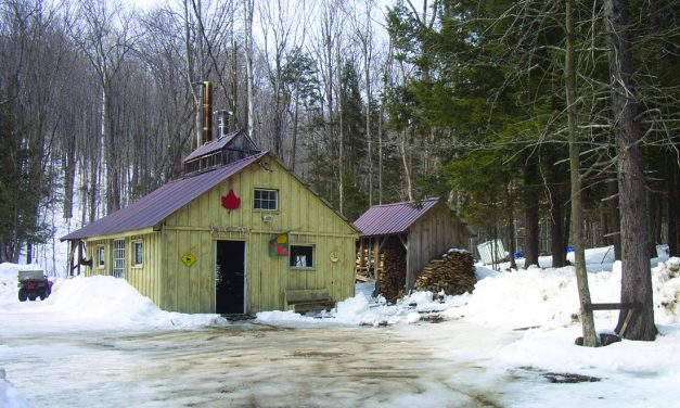 Annual maple syrup weekends have arrived